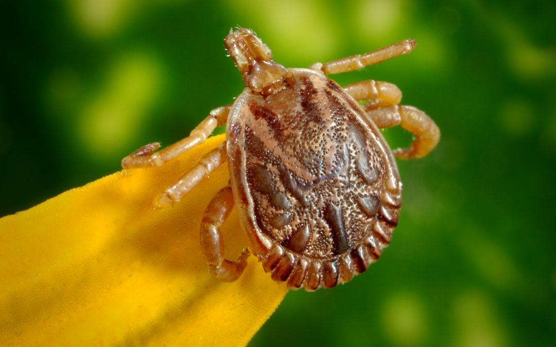Tick borne encephalitis virus in the United Kingdom